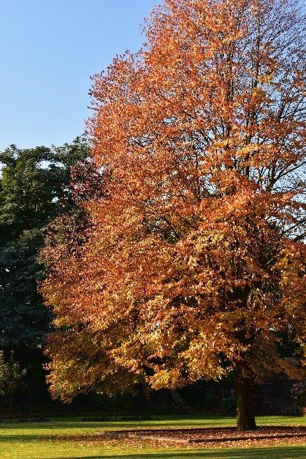Herfst en verandering